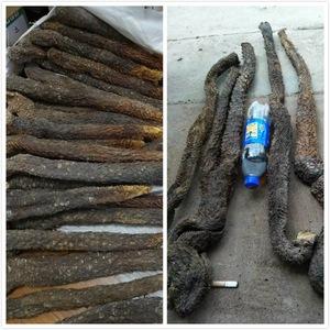 肉苁蓉阿拉善野生肉苁蓉油苁蓉性胶质60~70cm一根1.3斤